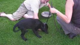 Embedded thumbnail for Puppy cursus Tibo bij KC Culemborg